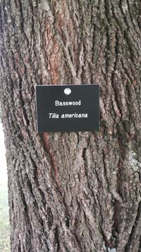 Basswood Tag