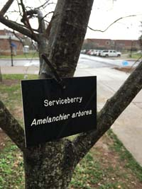 Serviceberry Tag