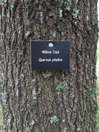 Willow Oak Biology Tag